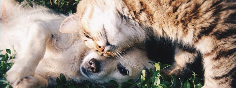 子供の代わり犬・猫を飼う生活や生活費紹介05jpg